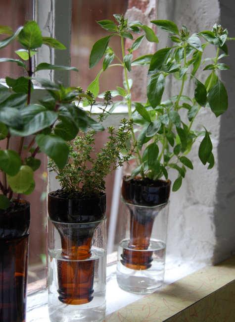 mystic-oasis-bottle-gardening-4